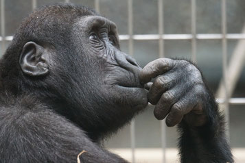 Nachdenkender Affe