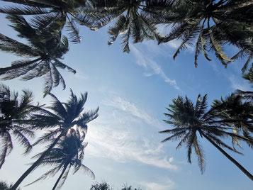 Relaxing under palmtrees, blauer Himmel, blue sky, Sri Lanka in 2019