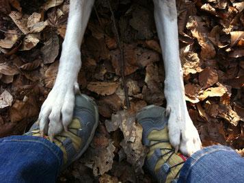 Mitten drin - im Training mit Mensch und Hund