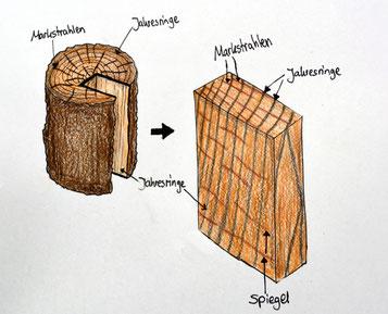 Wissenswertes Holz, eiche - Markstrahl,Spiegel und Jahresringe