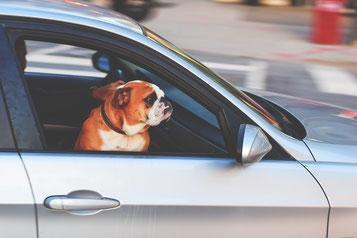 Nicht jeder Führerscheinbesitzer kann auch Auto fahren