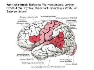 Logopädie Aichwald Wendtlandt Sprachtherapie Broca Areal Wernicke Areal Sprachzentrum Gehirn Esslingen