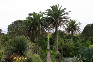 Palmen und mediterrane Pflanzen im Abbey Garden
