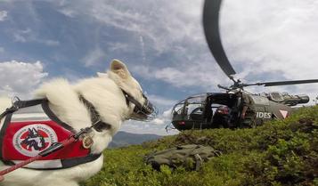Bild:Merlin Aragon vom weissen Wächter weißer Schäferhund Deckrüde