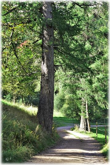 In den Wäldern des Schwarzwalds & Umgebung unterwegs