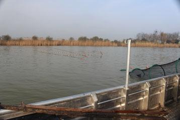 Fischerei mit Trappnetz