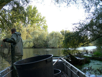Fischerei mit Reusen
