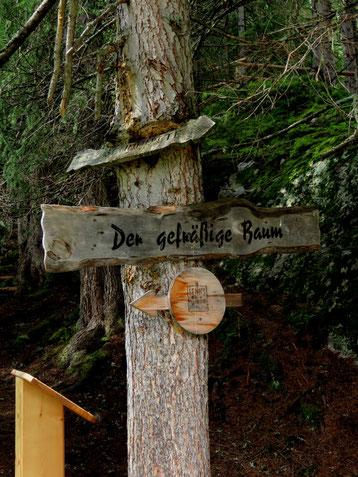 Wunderwald bei der Senn-Hütte