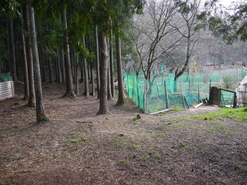5.杉の木フィールド