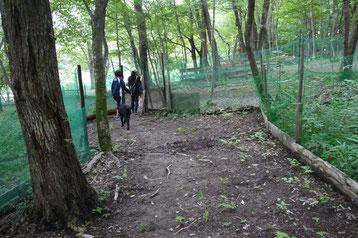 ノーリードの散策コース