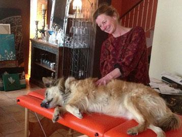 craniosacrale Ostheopathie  bei  einem Hund auf de Massagebank