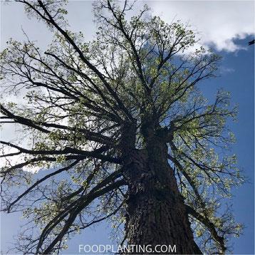 els, herfstbladeren, organische plantenvoeding