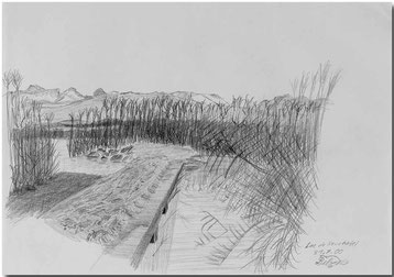 Bild:Lac Neuchatel,Neuenburgersee,Skizze,Schilf,Bleistift,Steg,Berge,David Brandenberger,d-t-b.ch,d-t-b,