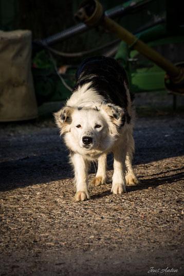 Hund will spielen und ist in Wartehaltung