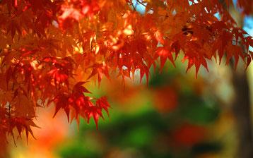 秋の景色 もみじ
