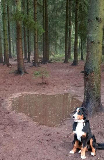 Nixe-Tanja alleine im Wald