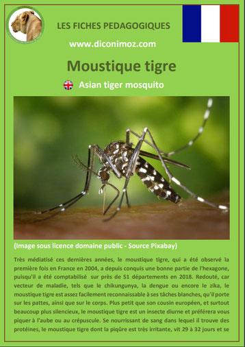 fiche animaux pdf insecte moustique tigre à telecharger et a imprimer