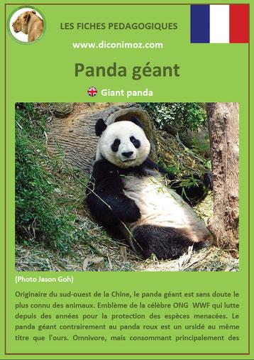 fiche animaux pdf panda geant ursides