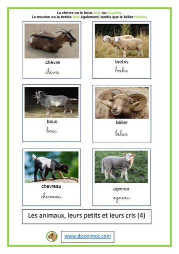 carte nomenclature animaux et petits et leurs cris 4
