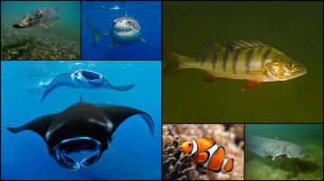 fiches animaux liste des poissons d'eaux douces et de mers