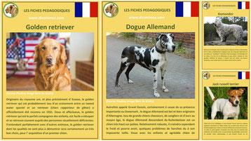 fiches animaux pdf pedagogiques chiens race comportement origine