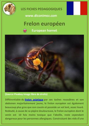 fiche animaux pdf insecte frelon europeen à telecharger et a imprimer