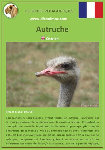 fiche animaux pdf oiseaux autruche à telecharger et a imprimer