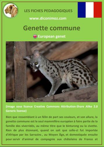 fiche animal pedagogique animaux de nos forets pdf genette commune