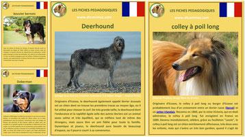 liste des races de chiens fiches animaux comportement caractere
