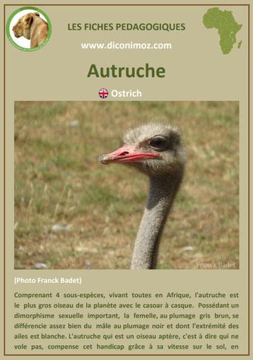 fiche animaux pdf afrique autruche habitat poids taille repartition alimentation reproduction comportement