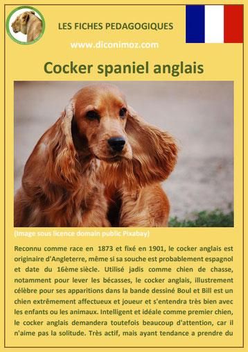 fiche chien pdf race cocker spaniel anglais comportement origine caractere soin poil