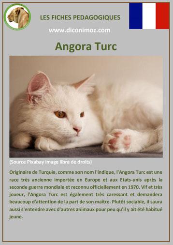 fiche animal animaux de compagnie chat angora turc comportement caractere origine