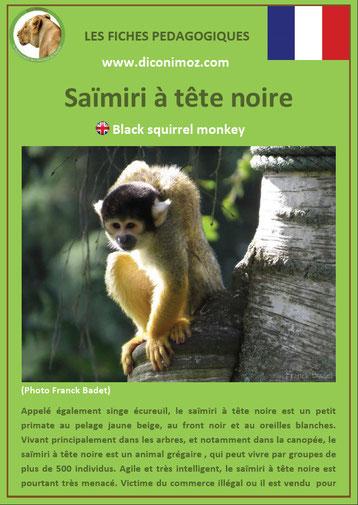 fiche animaux pdf singe saimiri singe ecureuil a telecharger et a imprimer