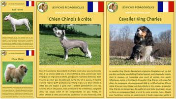 fiches chien race origine comportement caractere