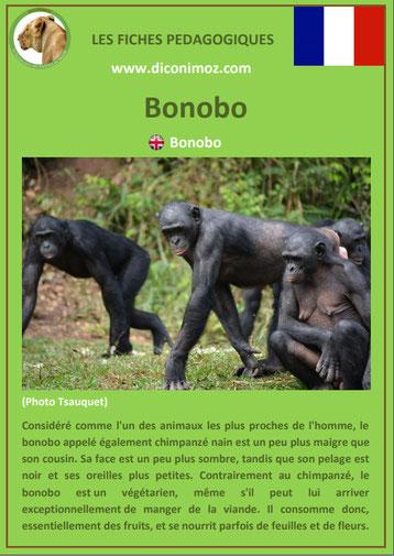 fiche animaux pedagogique singe bonobo pdf a telecharger et a imprimer