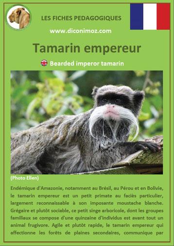 fiche animaux pdf singes tamarin empereur