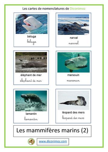 cartes de nomenclature ecriture cursive et script animaux marins 2