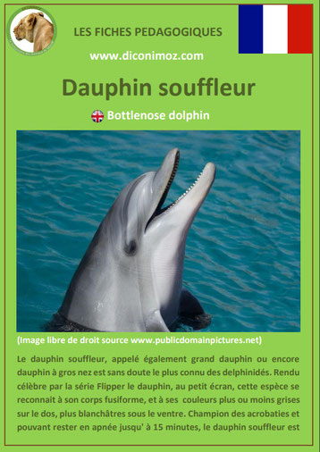 fiche animaux pedagogiques mammiferes marins pdf dauphin souffleur a telecharger et a imprimer
