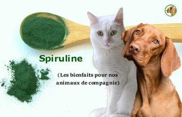 les bienfaits de la spiruline sur nos animaux de compagnie