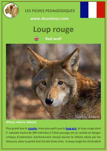 fiche animaux pdf pedgogique loup rouge a telecharger et a imprimer