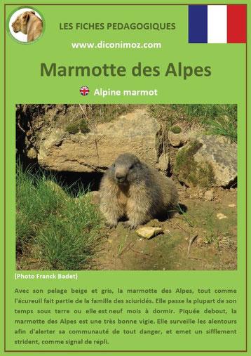 fiche animaux pédagogiques des montagnes francaises marmotte