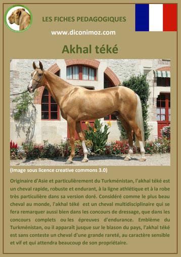fiche animal animaux de compagnie cheval chevaux akhal teke comportement caractere origine robe