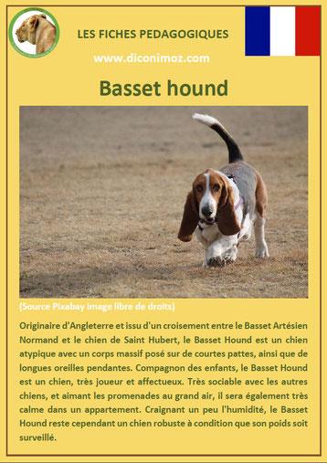 fiche animal animaux chien basset hound comportement origine caractere sante