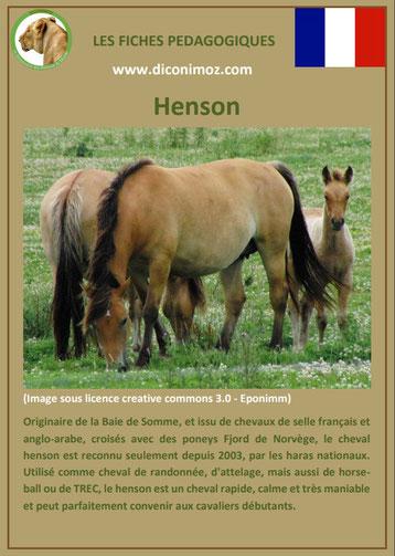 fiche cheval chevaux henson origine caractere comportement robe race