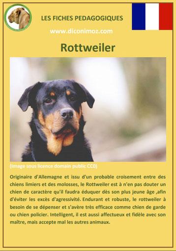 fiche chien pdf race rottweiler comportement origine caractere soin poil