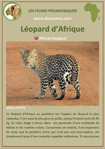 fiche animaux pdf afrique leopard panthere à telecharger et a imprimer