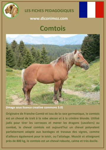 fiche cheval chevaux comtois trait origine caractere comportement robe race