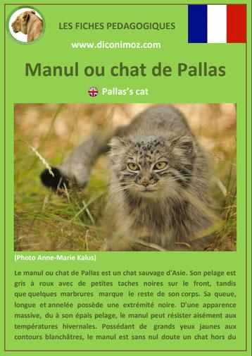 fiches animaux pdf pedgogique felins manul chat de pallas a telecharger