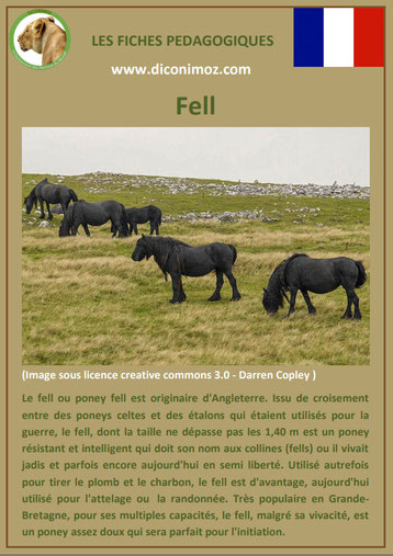 fiche cheval chevaux poney fell origine caractere comportement robe race