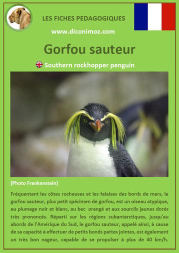 fiche animaux pdf oiseaux gorfou sauteur à telecharger et a imprimer